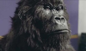 BLOG: We've all gone ape for drums, apparently