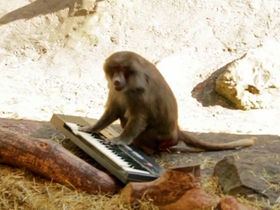 VIDEO: Can monkeys play synthesizers?
